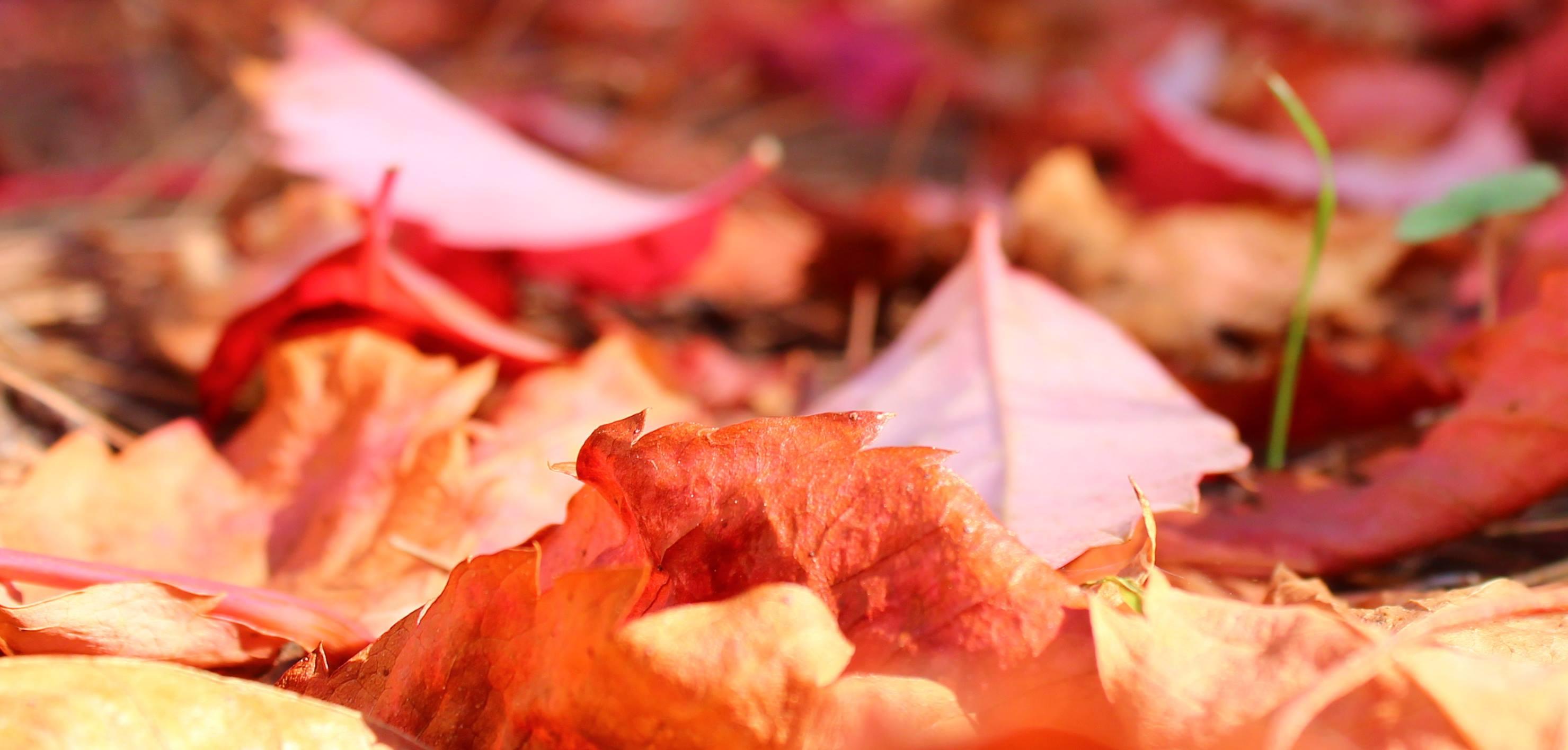 Righe rotte: autunno